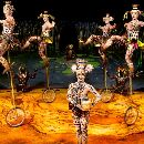 Cirque - Totem.jpg